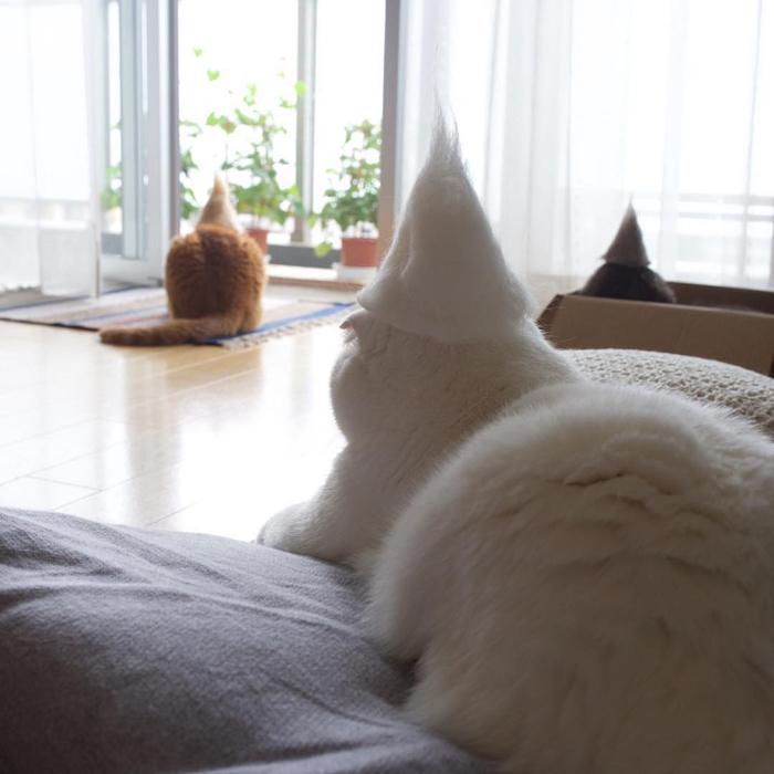 ryo yamazaki cat hair hats scottish fold