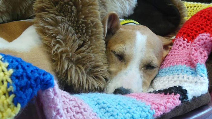 shelter dogs knitted blankets