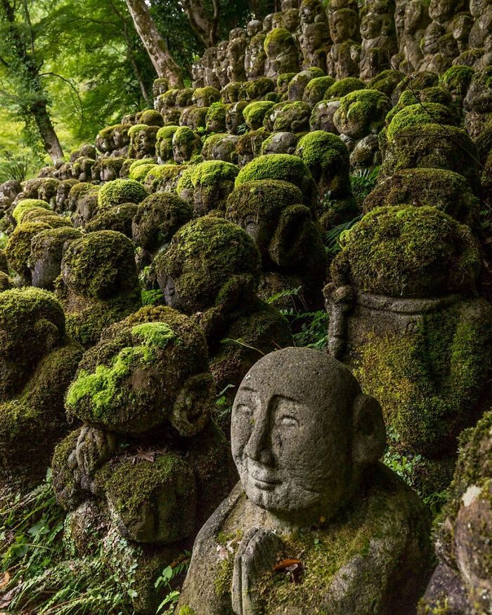 shrine in japan nature reclaiming taking over