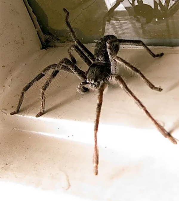spidey visit on a holiday scary animals in Australia