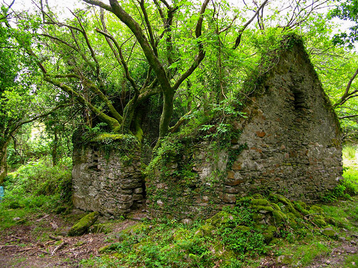 stone house in forest nature reclaiming taking over