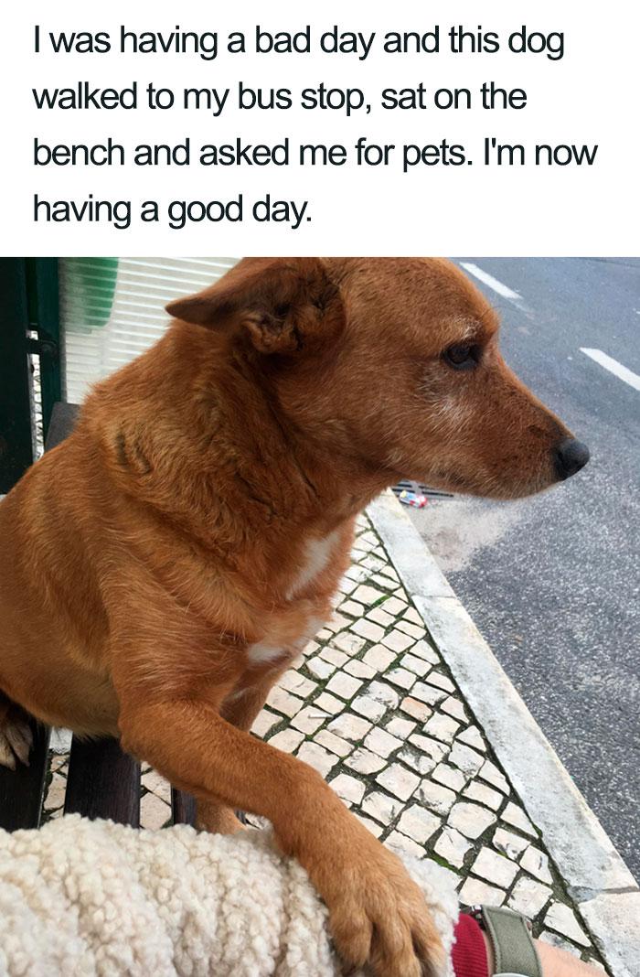 stranger dog asking for pet