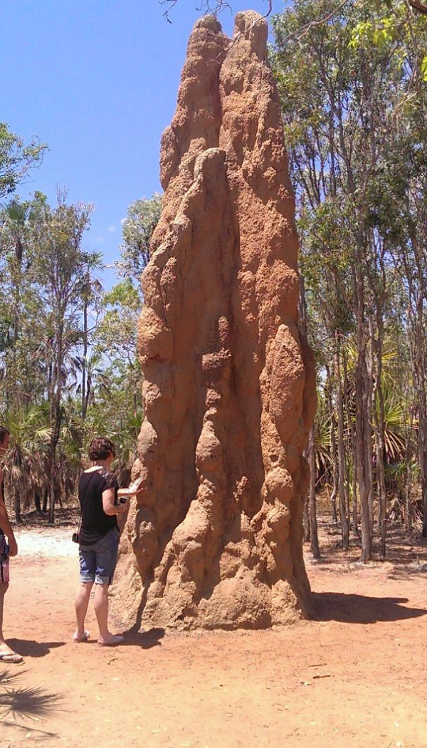 termite mound scary animals in Australia