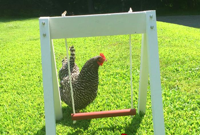 the chicken network etsy chicken swing set