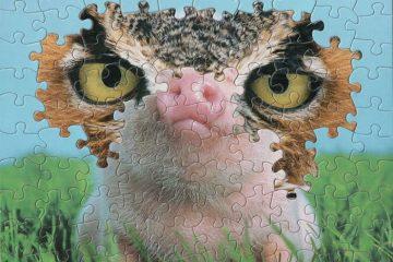 tim klein montage puzzle art pig jaw suzzle 2