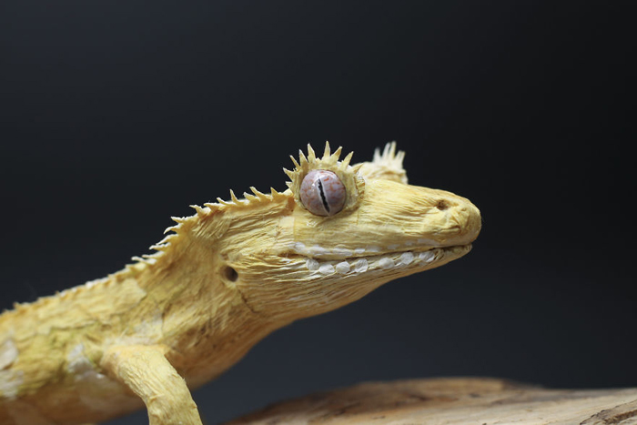 tina kraus crepe paper objects crested gecko head detail