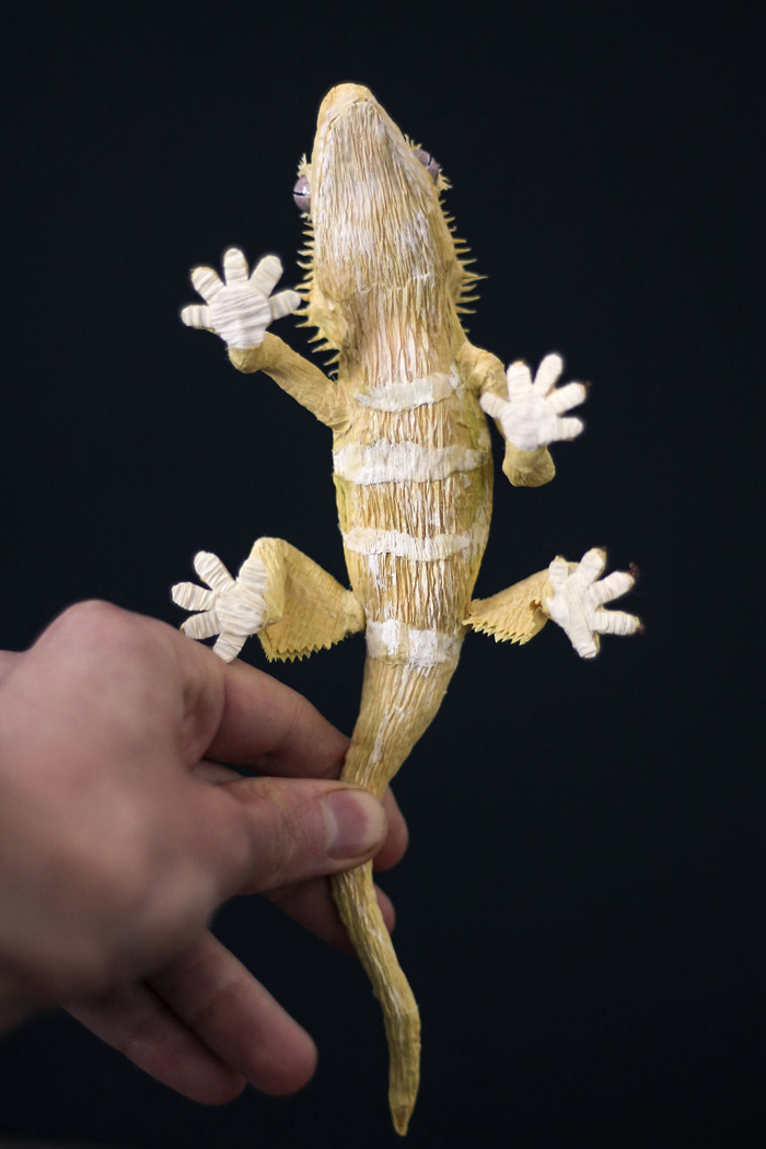 tina kraus crepe paper objects crested gecko underneath view