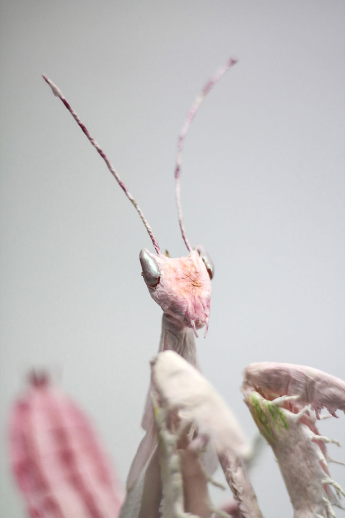 tina kraus crepe paper objects orchid mantis head detail