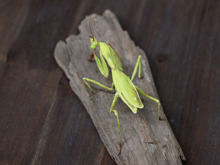 tina kraus crepe paper objects realistic mantis