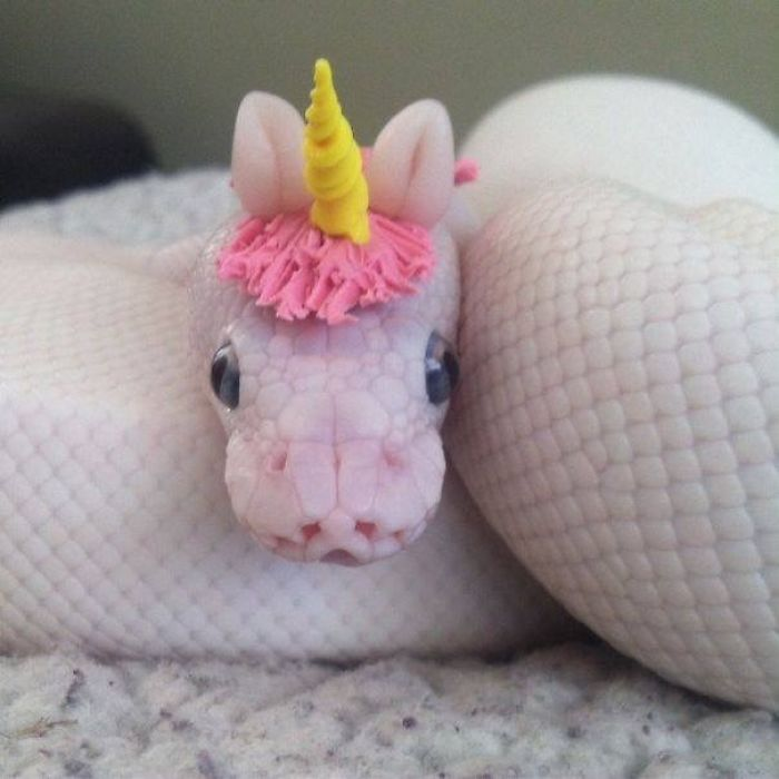 unicorn looking cute snake pictures