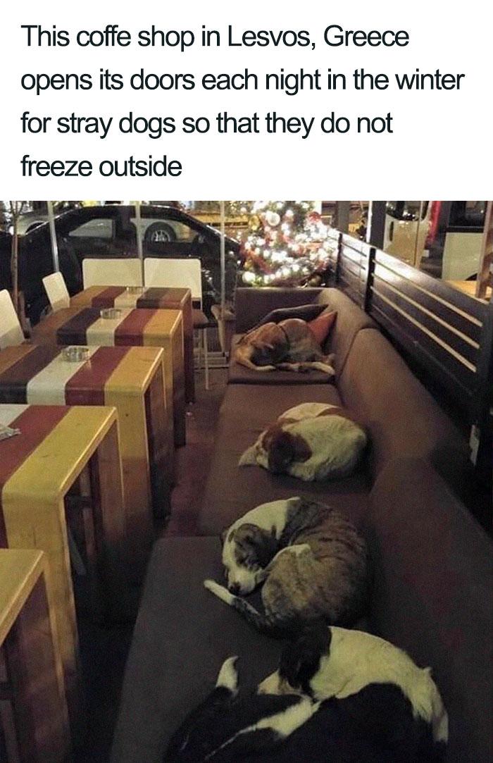 wholesome dog posts coffee shop greece