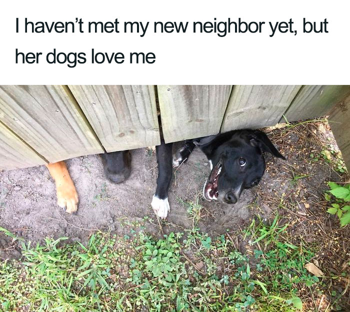 wholesome dog posts friendly neighbors