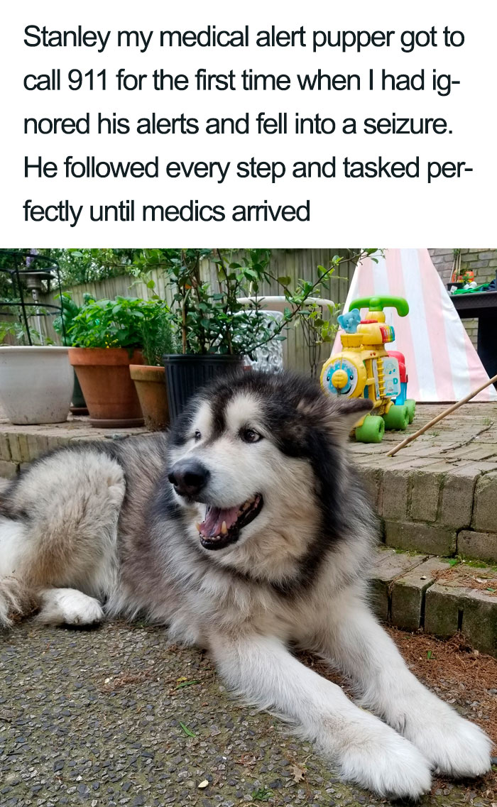 wholesome dog posts medical alert puppy