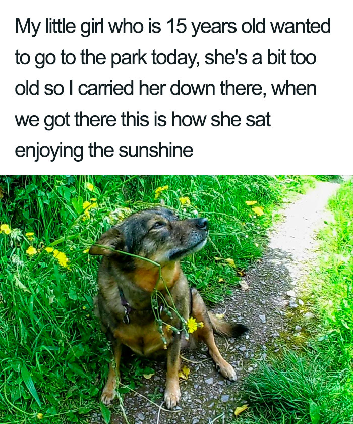 wholesome dog posts old dog in the park