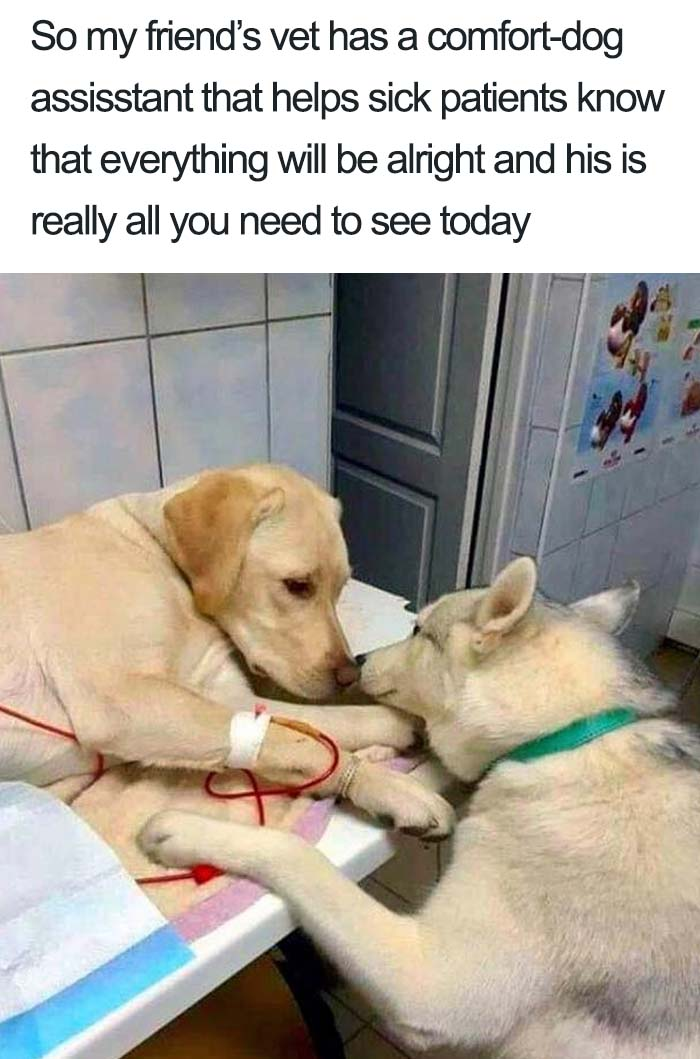 wholesome dog posts vet comfort assistant