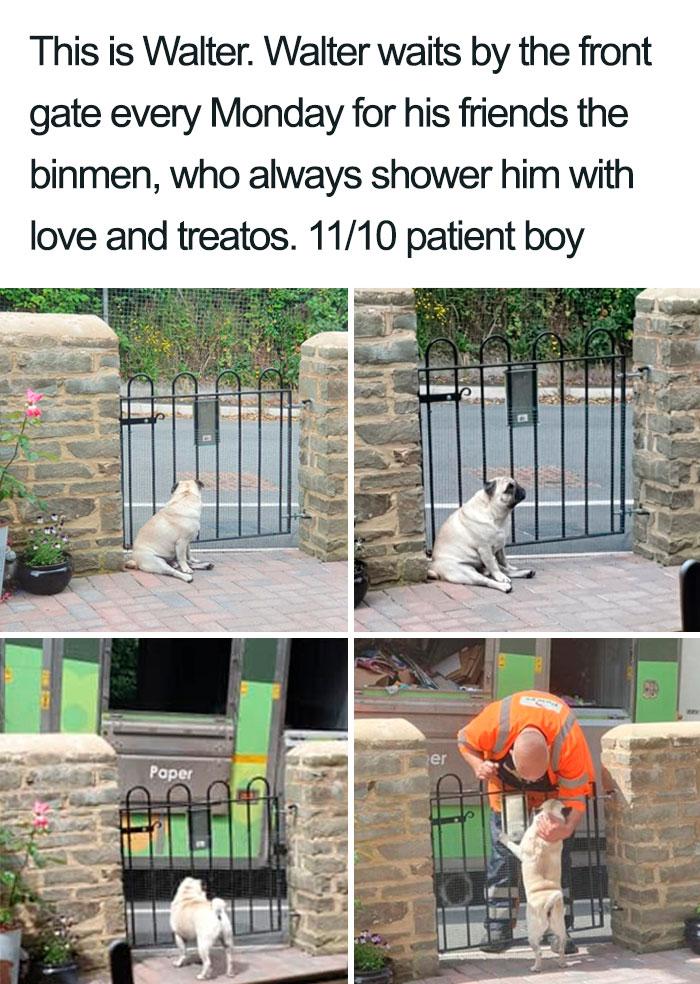 wholesome dog posts walter binmen friendship
