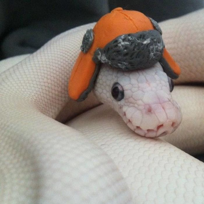 with hat cute snake pictures