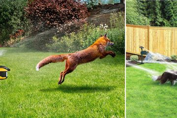 Animal Sprinkler Repeller
