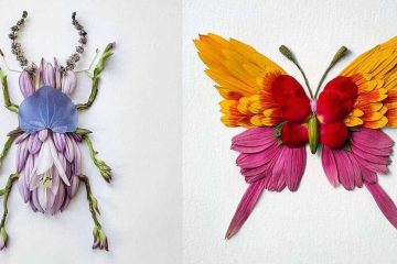Insects From Freshly Cut Flowers