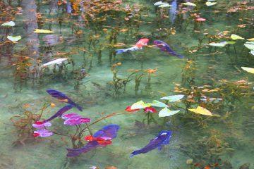 Monets Pond