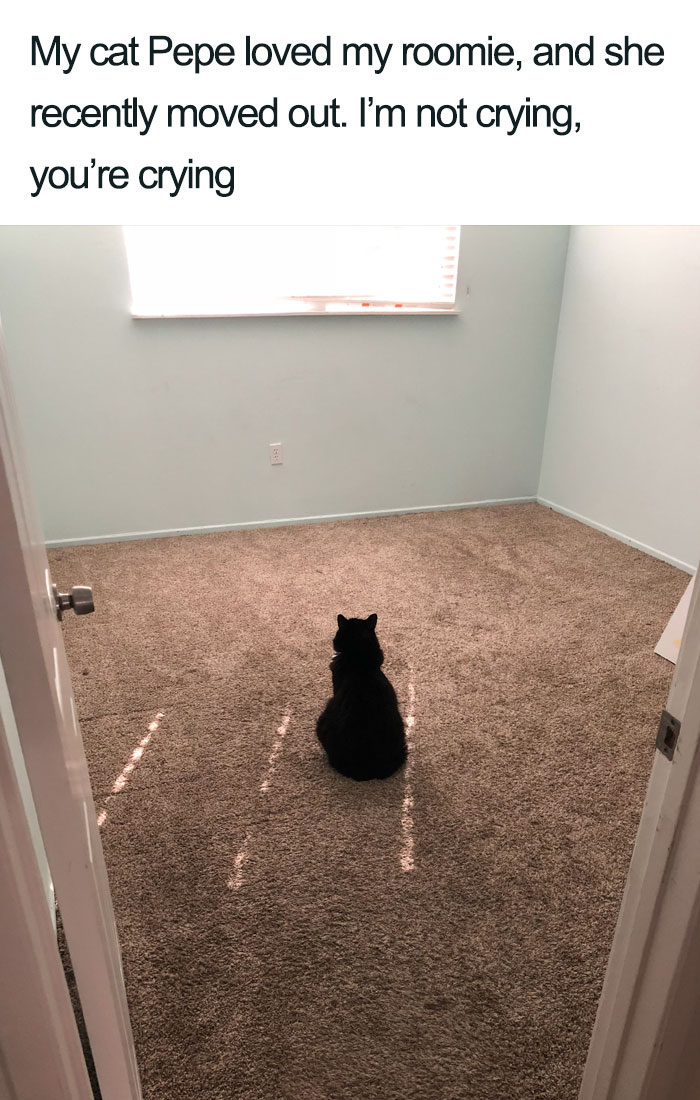 Pepe cat missing my roomie wholesome cat posts