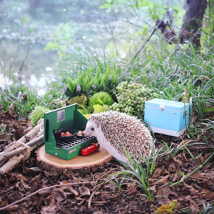azuki camping hedgehog cooking barbecue