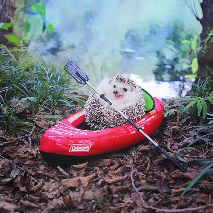azuki camping hedgehog kayak