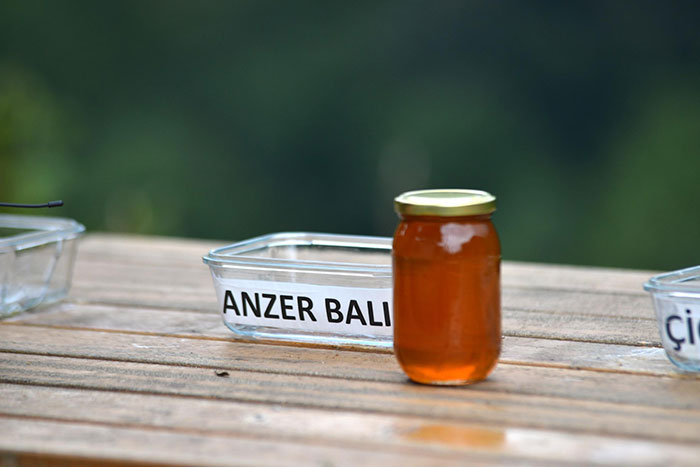 bear honey tasters anzer bali favorite
