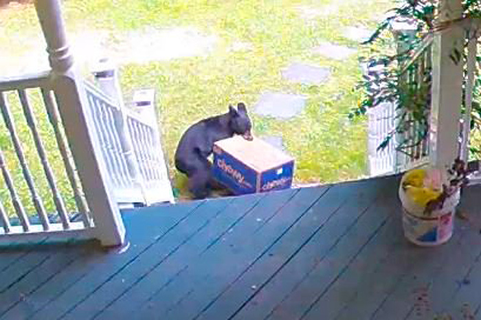 bear steals package front porch