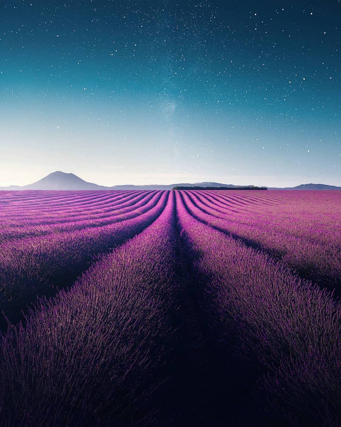 beautiful lavender field lavender video samir belhamra