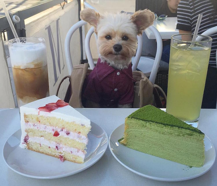 cakes popeye the foodie dog