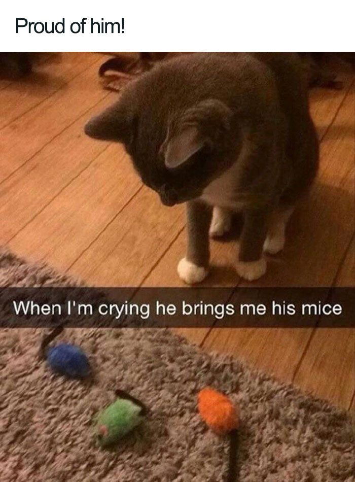 cat bringing toy mice when im crying wholesome cat posts