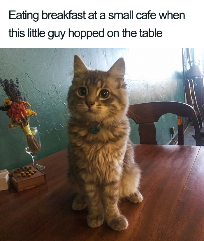 cat on the table wholesome cat posts