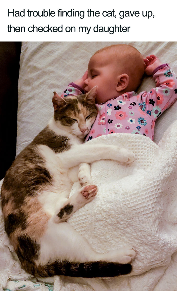 cat with daughter baby wholesome cat posts