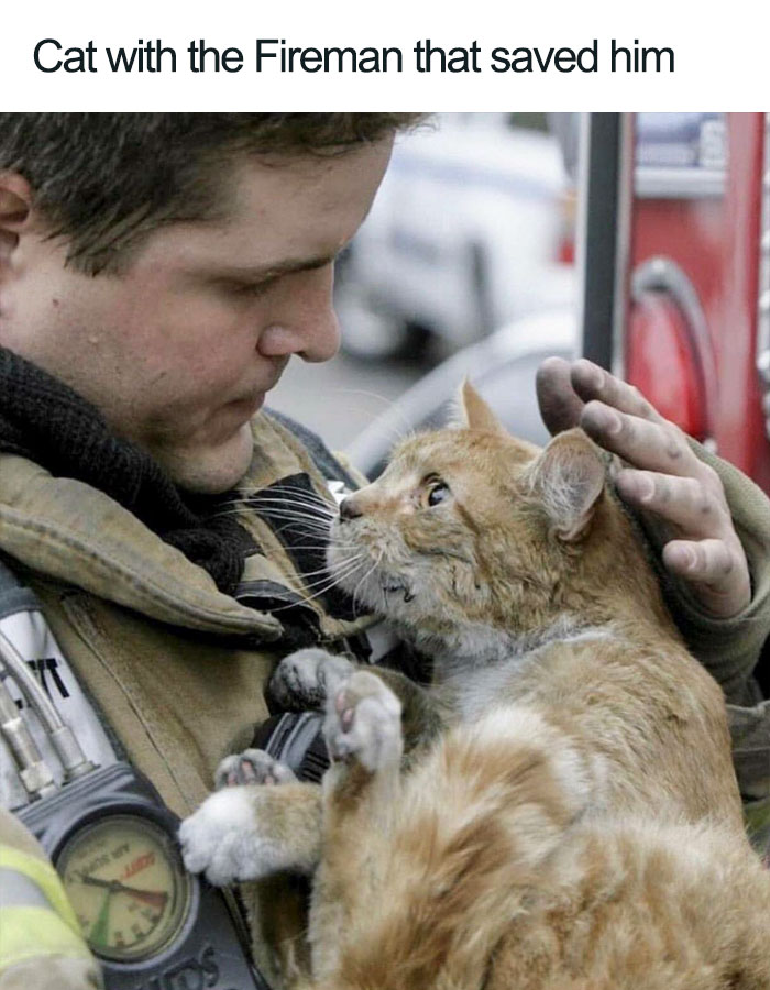 cat with the fireman that saved him wholesome cat posts
