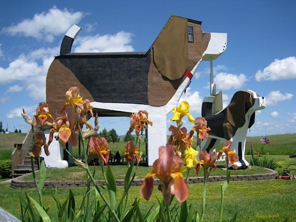 closer view of beagle shaped hotel dog bark park inn