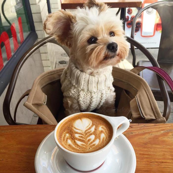 coffee popeye the foodie dog