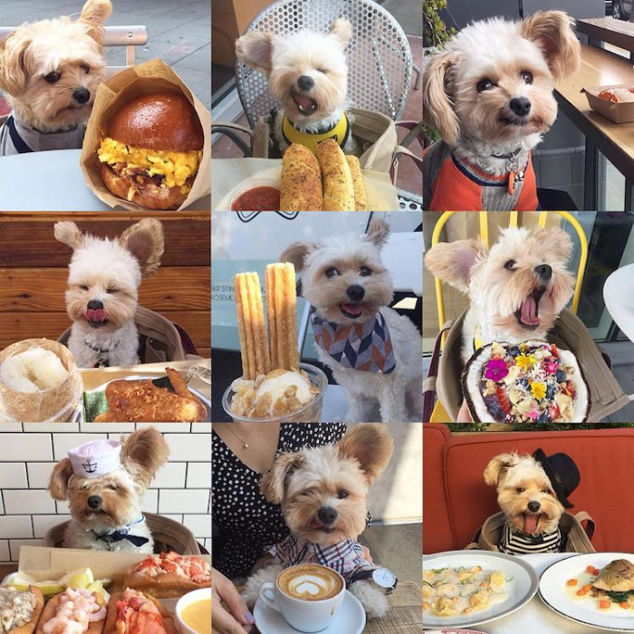 collage popeye the foodie dog