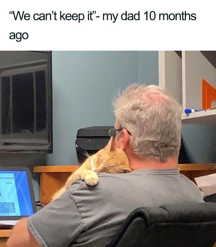 dad who said can't keep cat wholesome cat posts