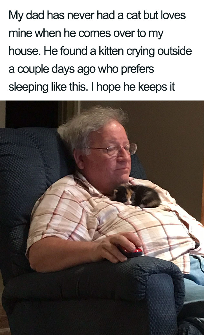 dad with kitten wholesome cat posts