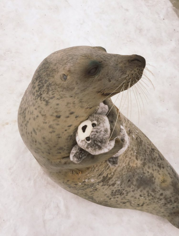 delightful earless seal hugs stuffed toy