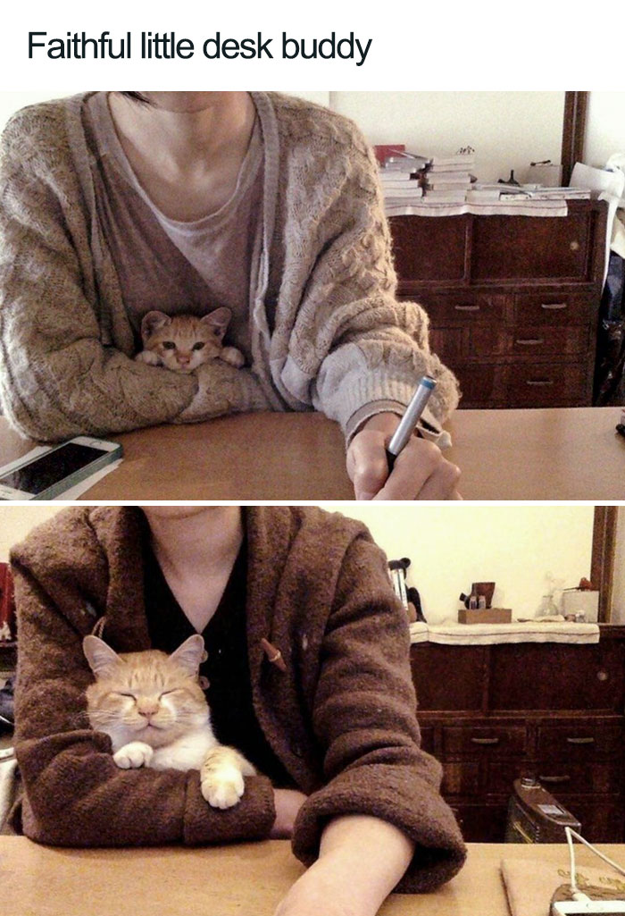 faithful little desk buddy wholesome cat posts