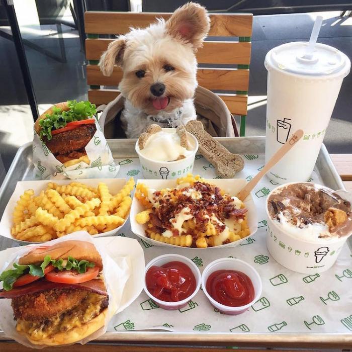 fast food popeye the foodie dog