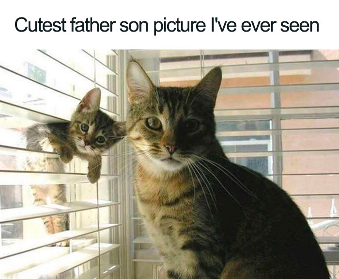 father and son cat best picture wholesome cat posts