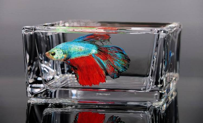 fish in rectangular glass young sung kim hyperrealism