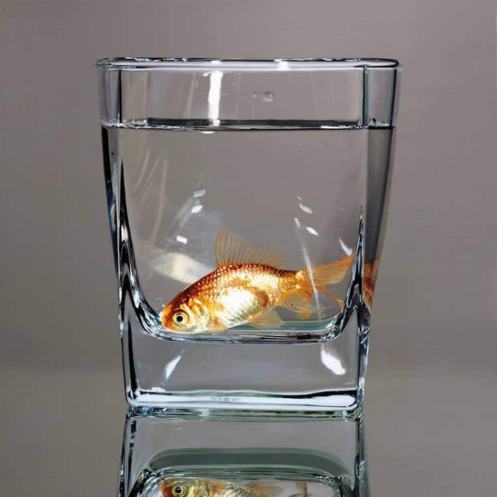 fish in water glass young sung kim hyperrealism
