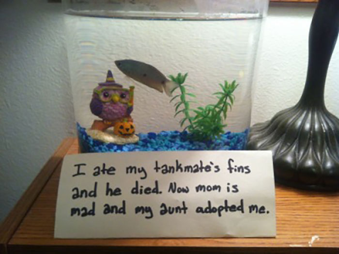 hilarious fishes fish adopted by aunt