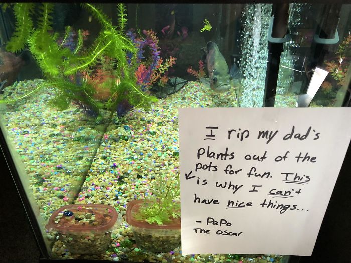 hilarious fishes fish rips plants