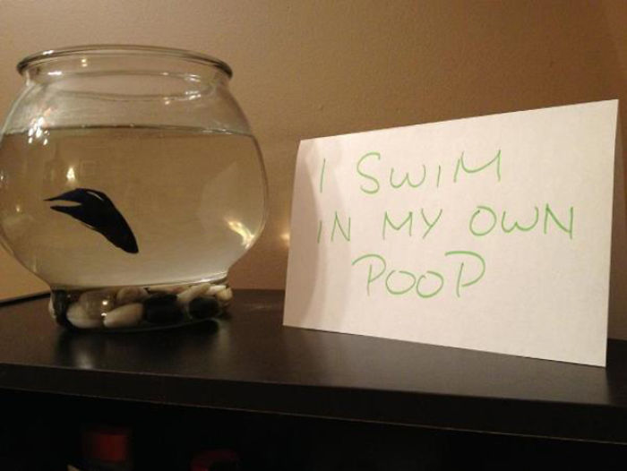 hilarious fishes fish swims in poop