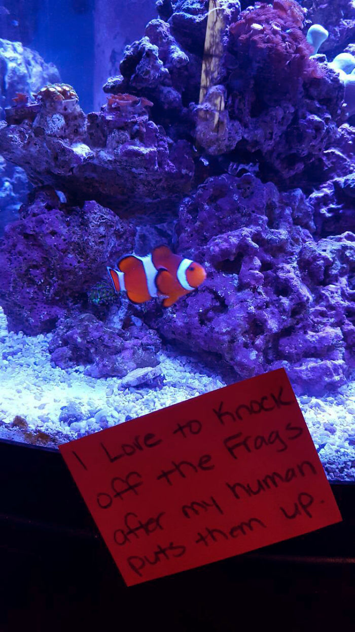 hilarious fishes funny clown fish